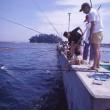 篠島+釣り天国
