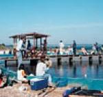 南知多 海釣りセンター